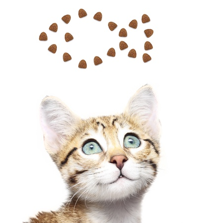 Cute kitten looking up on a fish from dry food  photo