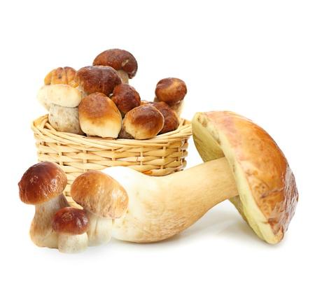 edulis: Boletus Edulis mushrooms in straw basket isolated on white background