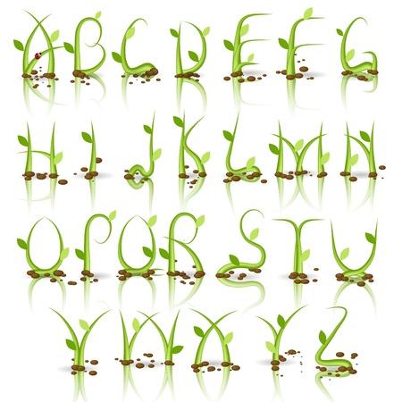 Alfabeto hierba verde