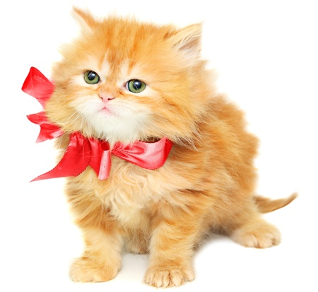 whiskar: Red kitten with  bow on a white background Stock Photo