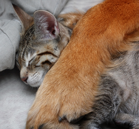 Large dog hugs a cat  photo