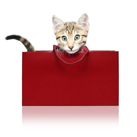 whiskar: Cute kitten in a red shopping bag on a white background Stock Photo