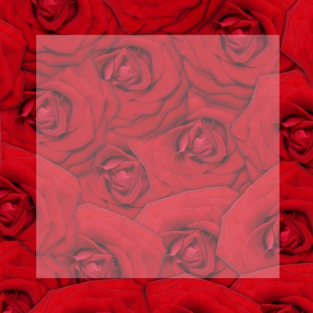 Red rose flower background  photo