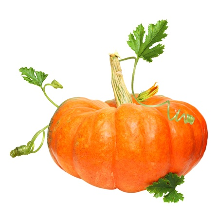 Pumpkin vegetable isolated on white photo
