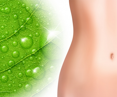 perfect female body: Perfect woman belly against green leaf