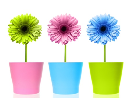 Colorful flowers in pots. photo