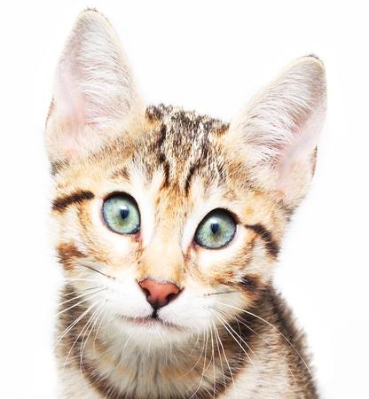 sadly: Carino tristemente gattino. Archivio Fotografico