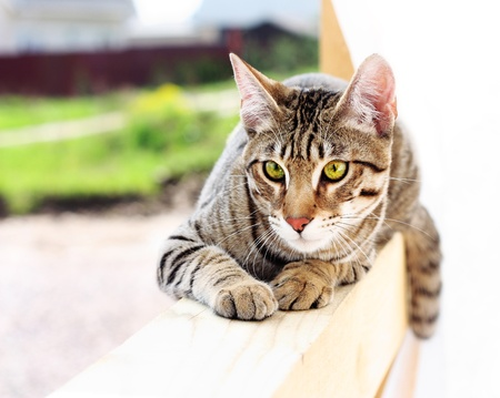 whiskar: Young cat on a wooden board. Stock Photo