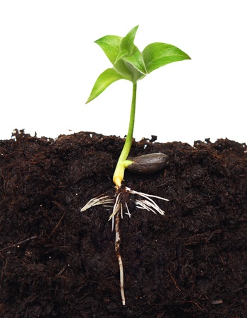 Small apple tree in ground with root. Stock Photo