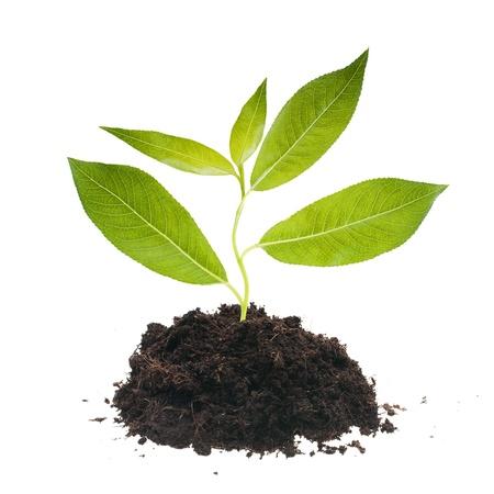 Plantl tree in ground.