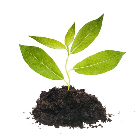new beginnings: Plantl tree in ground. Stock Photo