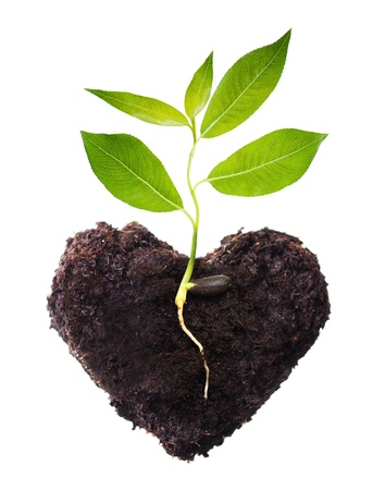 new beginning: Plant tree in ground with root. Stock Photo