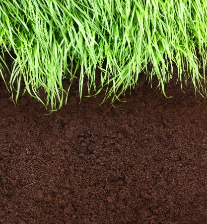 Green grass and soil photo