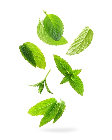 Green mint leaves isolated on a white background. Stock Photo