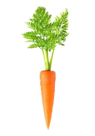 aislado: Zanahoria aislada en el fondo blanco
