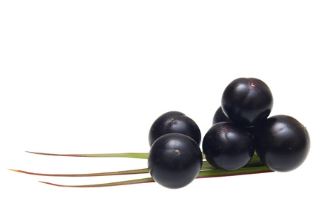 acai berry: Amazon acai fruit with palm leaves isolated on white background.
