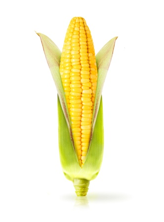 maize cultivation: Corn  isolated on a white background