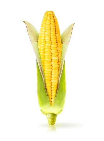 planta de maiz: Maíz aislado en un fondo blanco