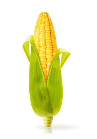 fresh pop corn: Corn  isolated on a white background