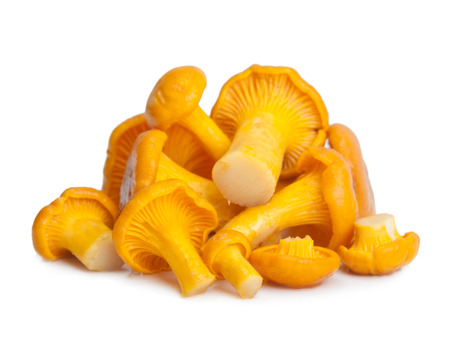 mycology: Chanterelle isolated on white, edible wild mushroom, Cantharellus cibarius. Stock Photo