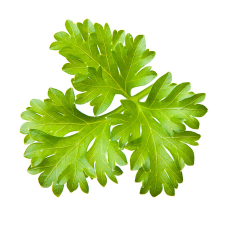 Parsley herb isolated on white background. photo