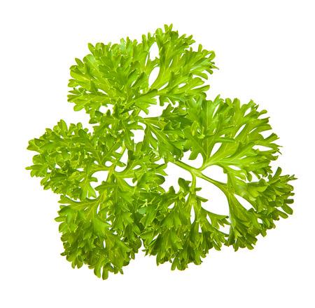 Parsley herb isolated on white background. photo