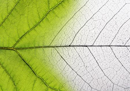 Zielony liść makro w tle.