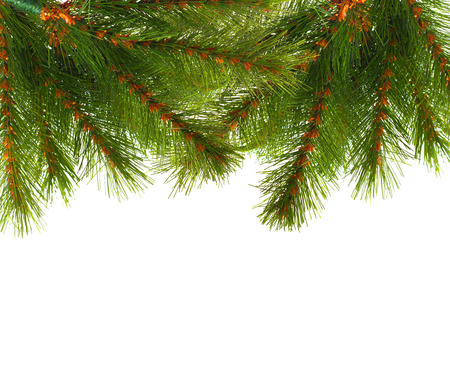 pinetree: Artificial pine tree branch isolated on white Stock Photo