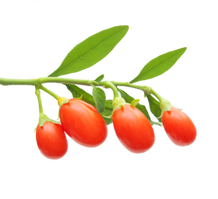 herbology: Goji berry isolated on white background.