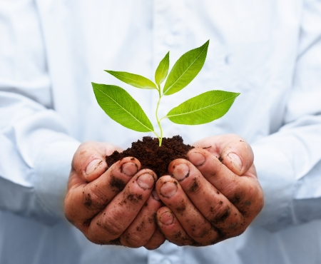 Man hands holding green plant. Ecology concept Stock Photo - 24320498