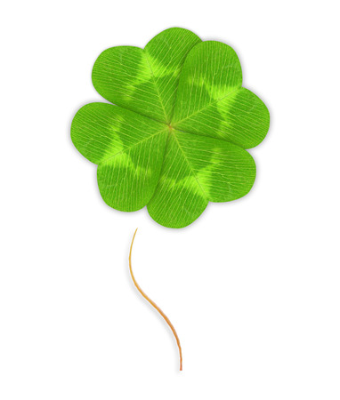 fourleaf: Four-leaf green clover leaf isolated on white background.