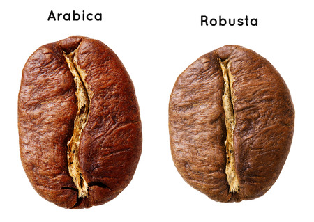 Black arabica, robusta coffee bean isolated on white background. Stock Photo