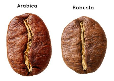 robusta: Black arabica, robusta coffee bean isolated on white background. Stock Photo