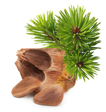 Nuts from cedar pine cone isolated on white background