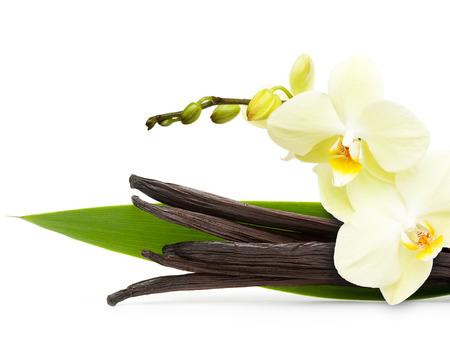 vanilla flower: Vanilla pods and flower isolated on white background Stock Photo