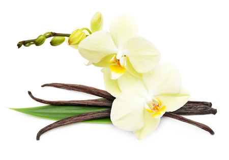 flores exoticas: Vainas de la vainilla y flores aisladas sobre fondo blanco Foto de archivo