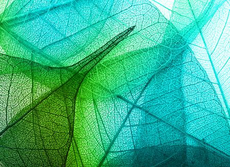 Macro bladeren achtergrond textuur Stockfoto