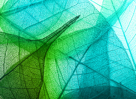 Macro hojas de textura de fondo Foto de archivo