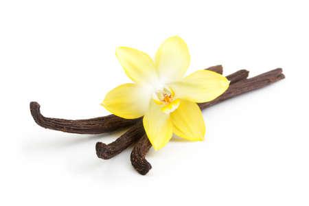 flores exoticas: Vainas de vainilla y flor de la orqu�dea aislado en fondo blanco Foto de archivo