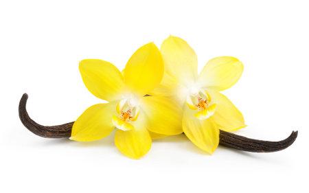 Vainas de vainilla y flor de la orquídea aislado en fondo blanco Foto de archivo