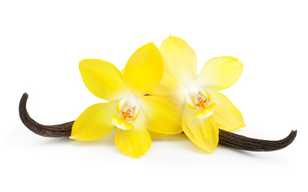 vanilla flower: Vanilla pods and orchid flower isolated on white background