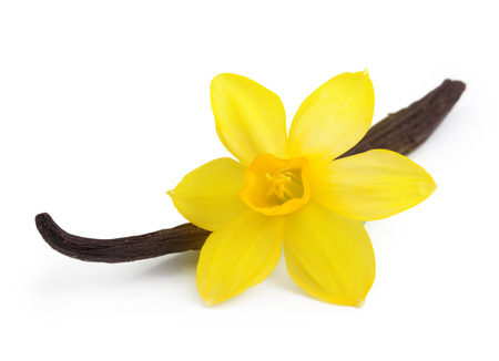 flor de vainilla: Vainas de vainilla y flor de la orquídea aislado en fondo blanco Foto de archivo