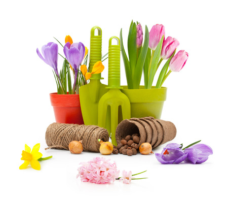 Flowers in pot and garden tools isolated on white. photo