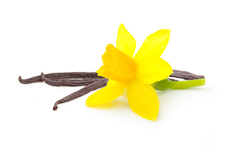 Vanilla pods and flower isolated on white background Фото со стока