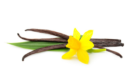 Vanilla pods and flower isolated on white background photo