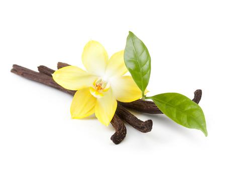 Vanilleschoten und Orchideenblüte isoliert auf weißem Hintergrund