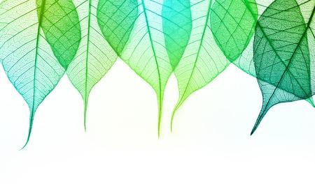 マクロ緑葉に孤立した白い背景 写真素材