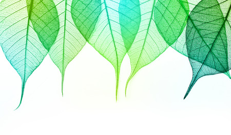 Macro green leaves isolated on white background