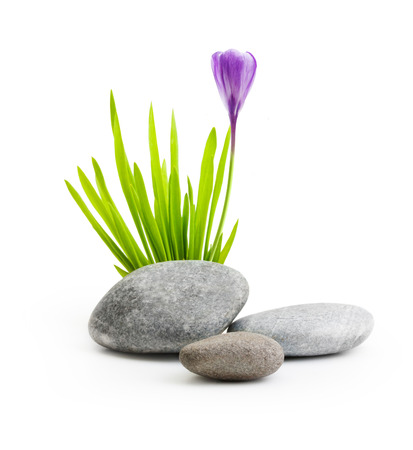 thalasso: Stones with grass and flower isolated on white background. Stock Photo