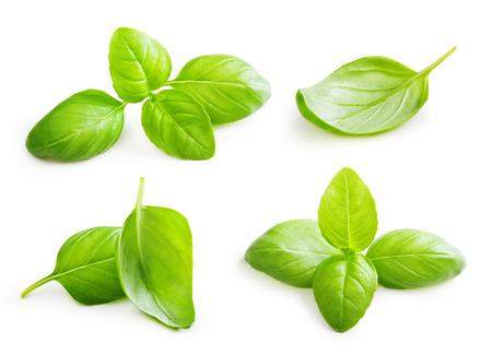 바 질 흰색 배경에 고립 양념 근접 촬영을 나뭇잎.